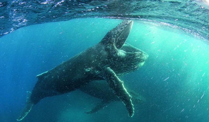 """Die Natur-Doku-Serie """"Unser Planet"""" mit David Attenborough ist ab 5. April zu sehen"""