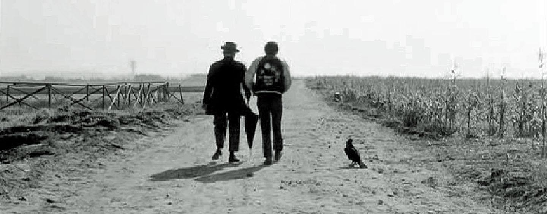 """""""Große Vögel, kleine Vögel"""" von Pier Paolo Pasolini"""