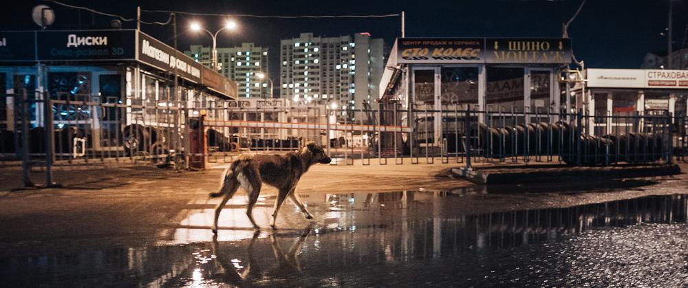 """Space Dogs"" (© Real Fiction Filmverleih)"