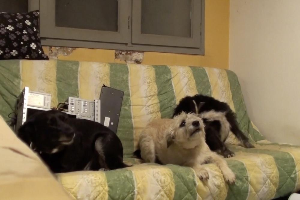 Die Hunde des Amateurfilmers spielen eine zentrale Rolle in den Aufnahmen (© Ignacio Ceroi)